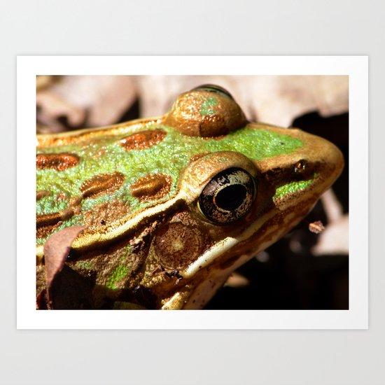frog face III Art Print
