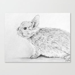 Bunny Drawing Canvas Print