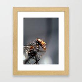 Alien Insect Framed Art Print