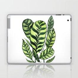 Ctenanthe Laptop & iPad Skin