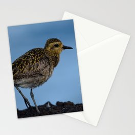 Pacific Golden Plover Stationery Cards