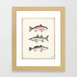 """""""Inshore Slam!"""" by Amber Marine ~ Redfish, Snook, & Trout Watercolor Illustration, (Copyright 2013) Framed Art Print"""
