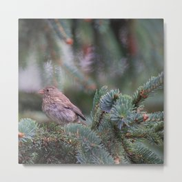 Backyard Visitor ~ I Metal Print