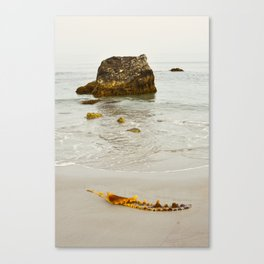Summer Beach Seaweed Canvas Print