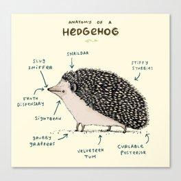 Anatomy of a Hedgehog Canvas Print