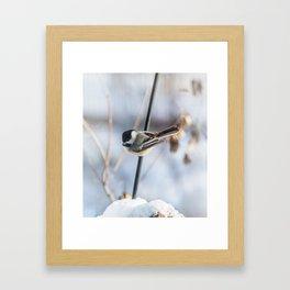 Chickadee waiting Framed Art Print