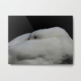 The Sleeping White Goose... Metal Print