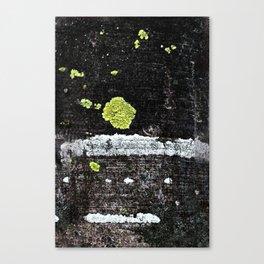 Lichens on a Tree Bark Canvas Print