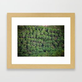 Young pine forest 6809 Framed Art Print