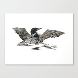 Morning Stretch - Common Loon Canvas Print