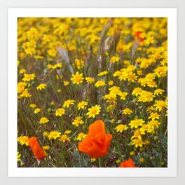 Patches of Gold Art Print