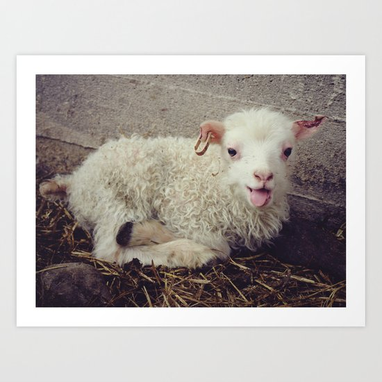 Sheep #5 Art Print