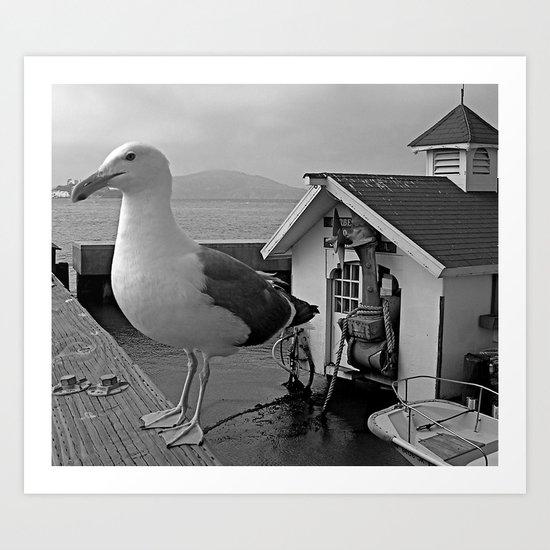 Gull Outlook Art Print