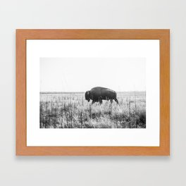 Bison strut Framed Art Print