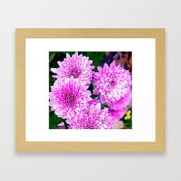 Beautiful Pink Flowers Framed Art Print