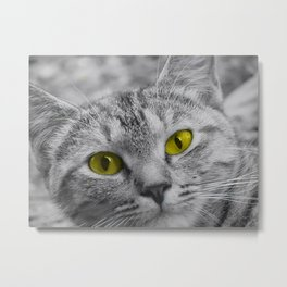 Cat with Piercing Yellow Eyes Metal Print