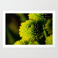 lime Art Prints featuring Lime by Nicole Stamsek