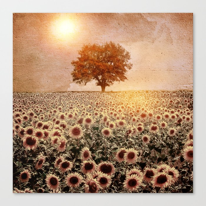 lone tree & sunflowers field (colour option) Canvas Print