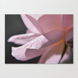 Sun-kissed Canvas Print