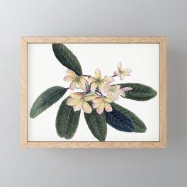 Jasmine Framed Mini Art Print