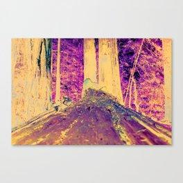 Muir Woods Logs Canvas Print