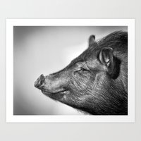 Black & Grey Piggles Art Print
