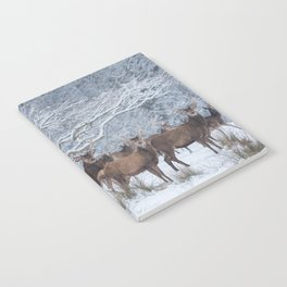 Red deers  from wintry Killarney National Park Notebook