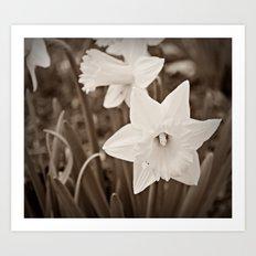 Dandy Daffodils Art Print