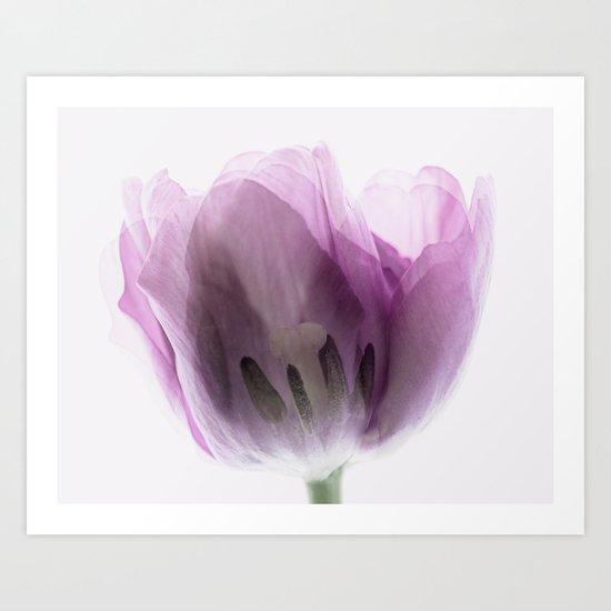 Inside Out Tulip Art Print