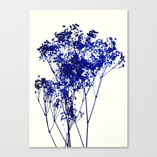 babys breath 1 Canvas Print