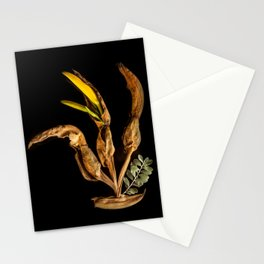 Natural Craw Stationery Cards