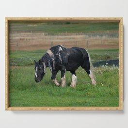 Gypsy Vanner Horse 0188 - Colorado Serving Tray