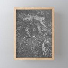 Old Roots Framed Mini Art Print