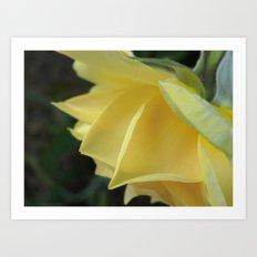 Soft Yellow Art Print