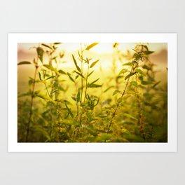 meadow herbs Art Print