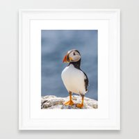 puffin Framed Art Prints featuring Puffin by Moonlake Designs
