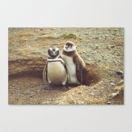 Penguin with chick Canvas Print