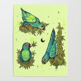 Parrots & Weeds Poster