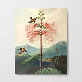 Large flowering sensitive plant. Metal Print