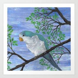 A painting of a quaker parrot Art Print