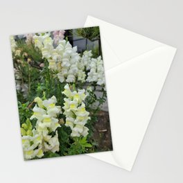 Snapdragon blooming in the garden of Hamdeok restaurant,Jeju Island.Korea. Stationery Cards