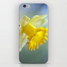 Daffodil 9909  iPhone & iPod Skin