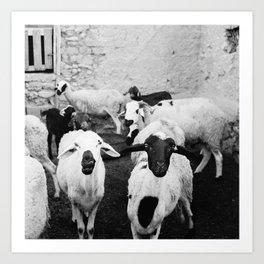 Sheep in Morrocan desert (black & white) Art Print