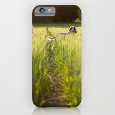 Brown Roan Italian Spinone iPhone 6s Slim Case
