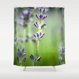 Lavander Shower Curtain