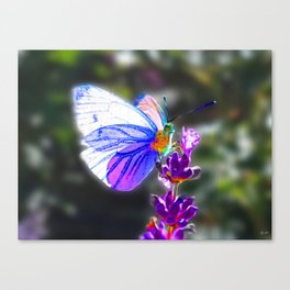 Butterfly on the Lavender Canvas Print