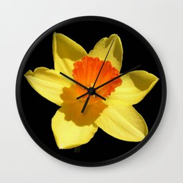 Spring Daffodil Isolated On Black Wall Clock