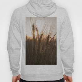 Wheat Holding the Sunset Hoody