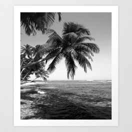 Palm on Water Art Print