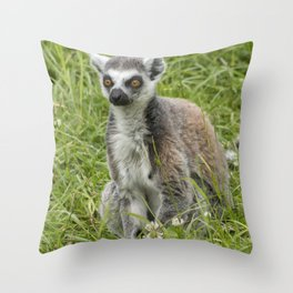 Beautiful ring-tailed lemur in the grass Throw Pillow
